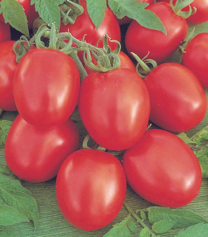 помидоры сорта бенито отзывы с фото птицы этой породы